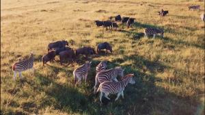 Wildlife van dichtbij en het mooiste uitzicht: deze beelden van Zuid-Afrika zijn waanzinnig