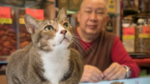 Nederlandse fotograaf in Hong Kong is enorme hit door katten