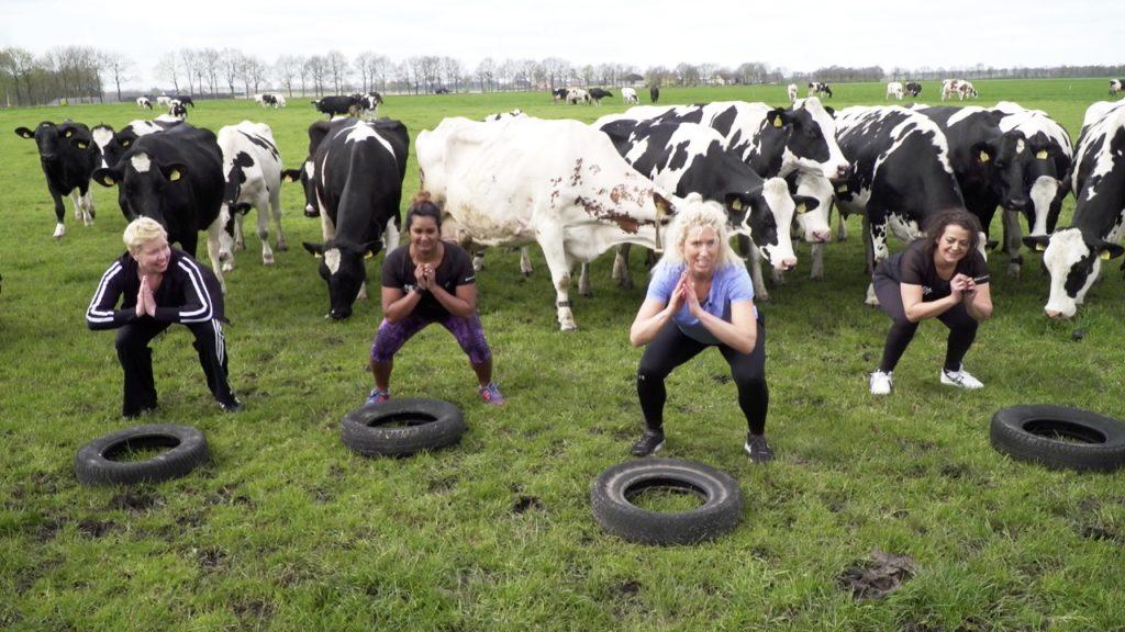 Onder het toeziend oog van een kudde koeien doen de drie LINDA.lijnt bloggers een zware work-out