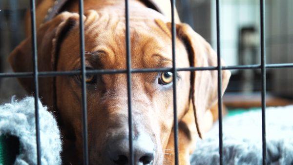 Hond Dunk is niet meer te vertrouwen: 'Ik ben doodsbang dat er iets gebeurt'