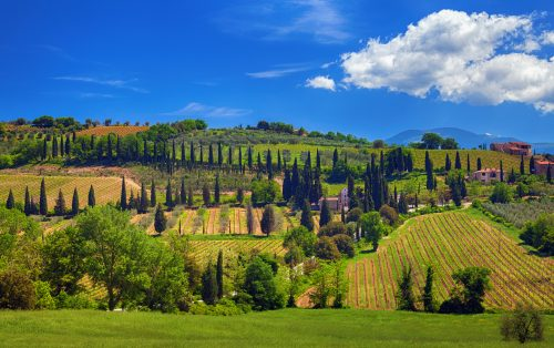 Harmony of fields, vineyards, cypress and olive trees and roads in Tuscany, Italy.