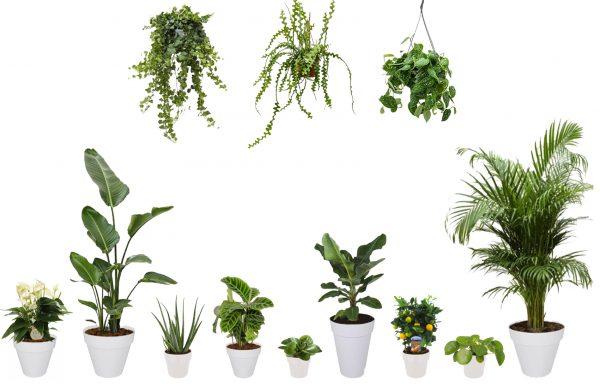 Plantenpakket Fleurdirect