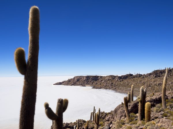 Isla del Pescad op zoutvlakte in Bolivia