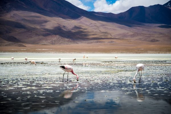 Zoutvlakte Bolivia rondon Salar de Uyuni.jpg