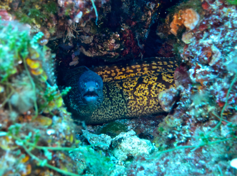 duiken Elba