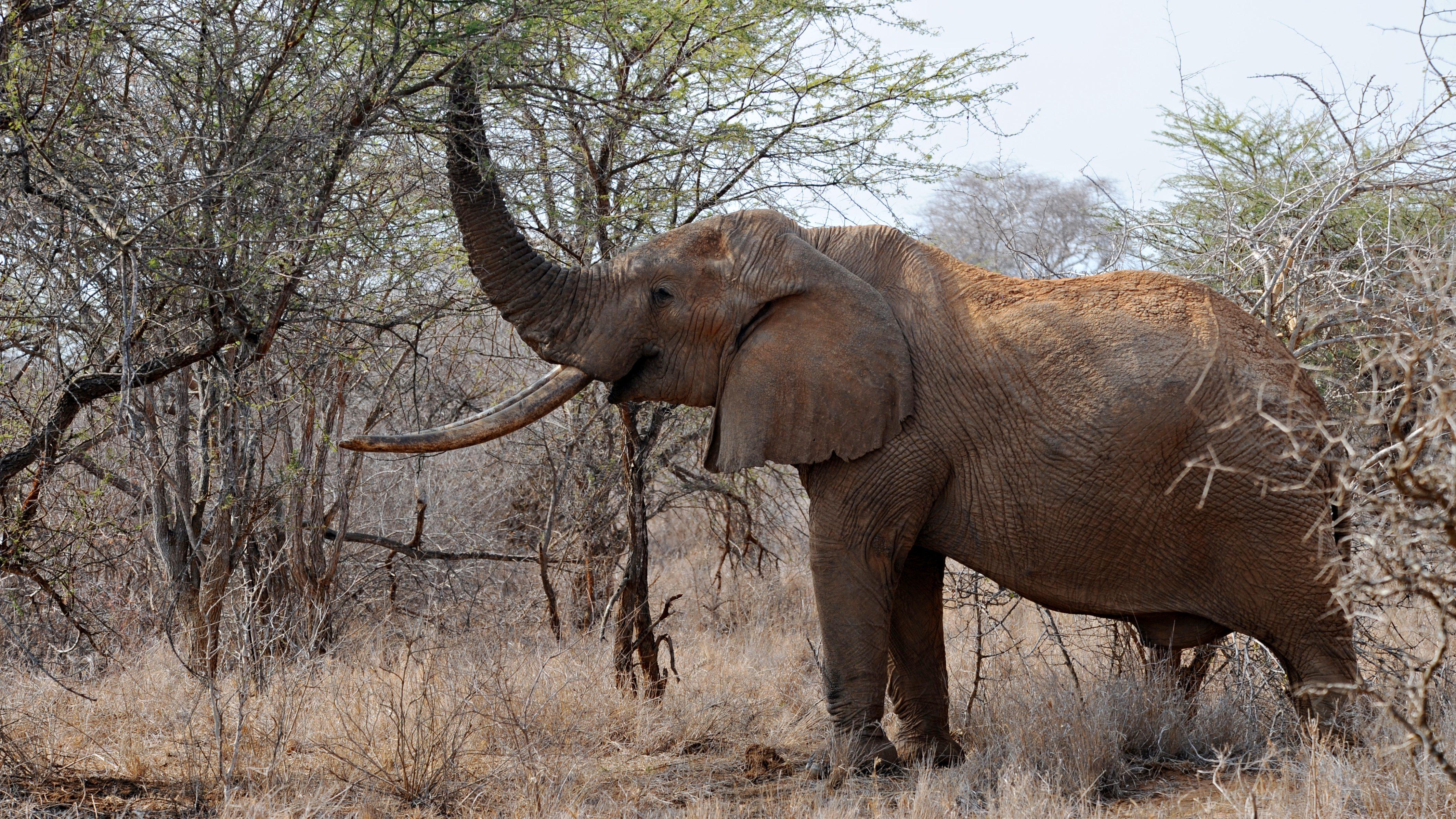 wilde dieren Namibië