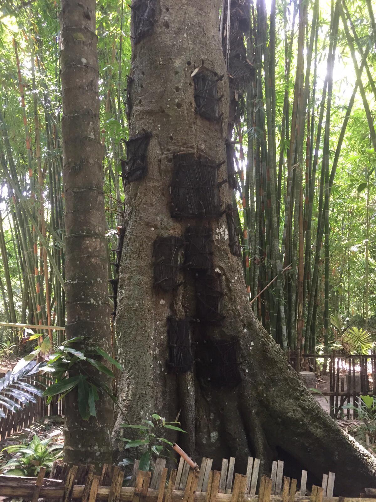 Interview Puck Teulings over haar bezoek aan de Toraja-stam op Sulawesi