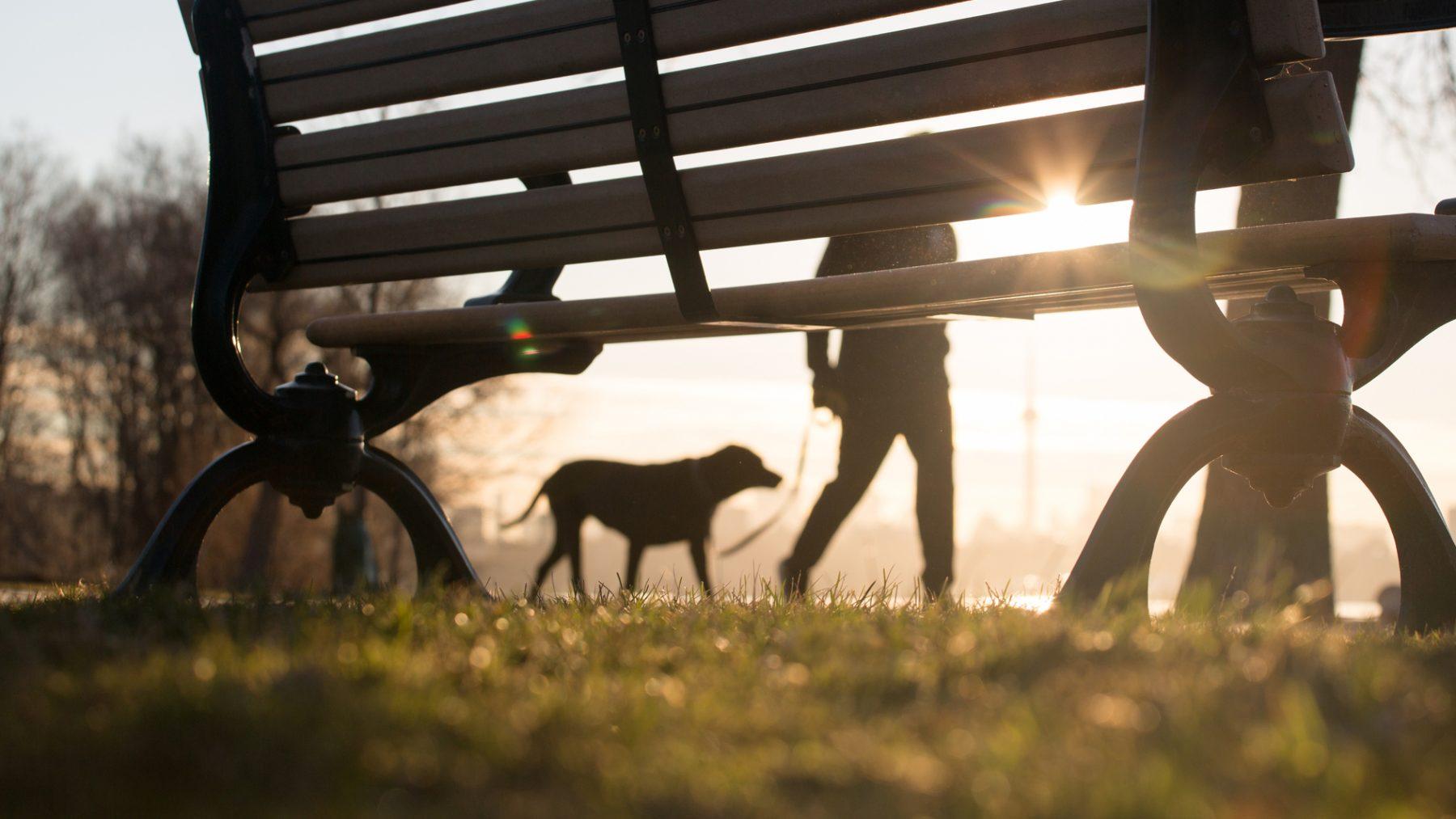 Hond in Aalsmeer overleden door oververhitting
