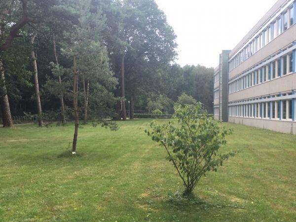 MH17 herdenking bomen Chris en Zeger