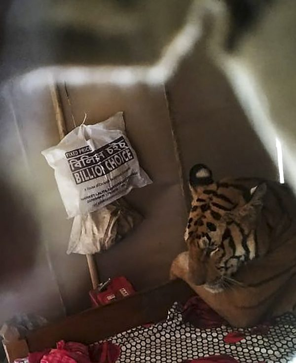 tijger bed