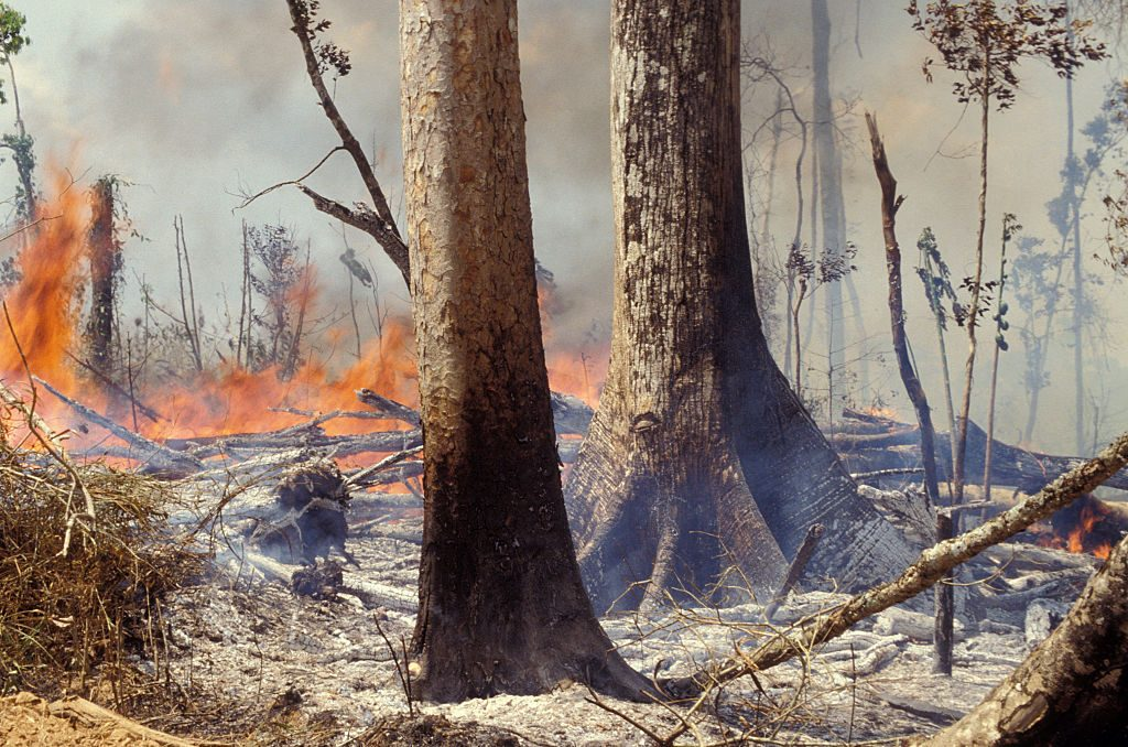 bosbranden-amazonegebied