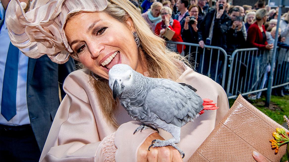 Koningspaar bezoekt Zuidwest-Drenthe papegaai