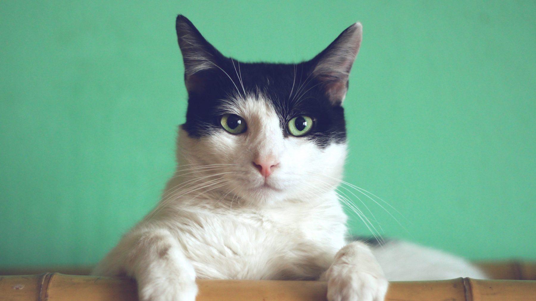 Hecht kat zich aan baasje, onderzoekers twijfelen