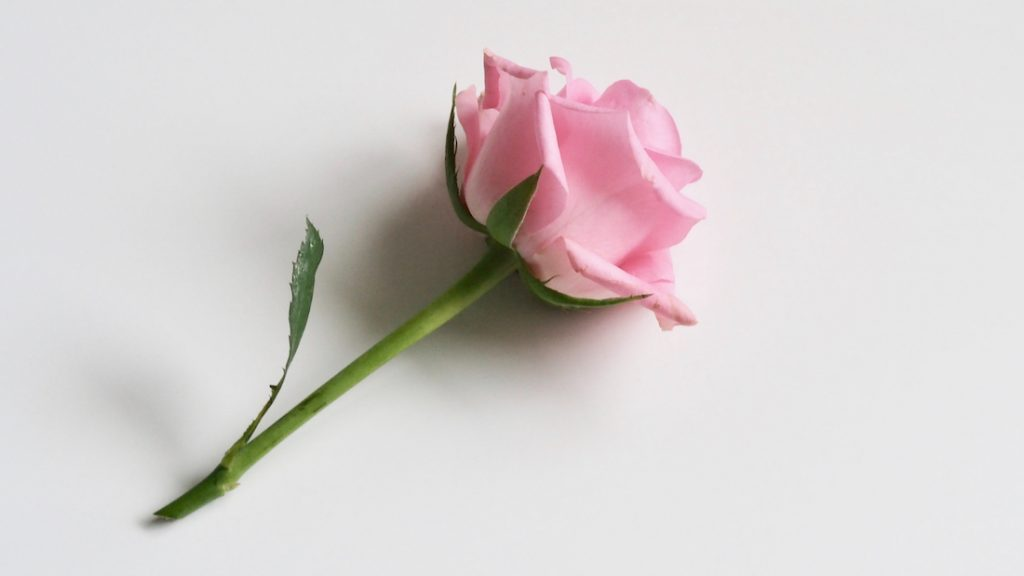monumentje oproep bloem