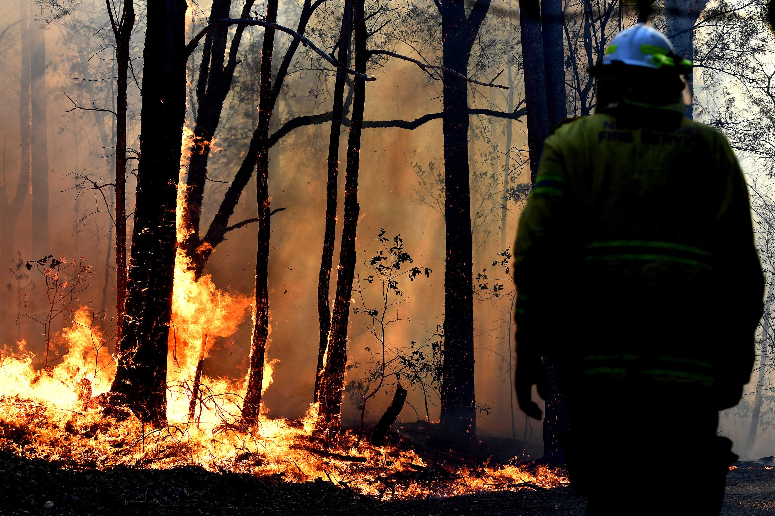 Honderden-koalas-omgekomen-bij-hevige-bosbranden-australie-1