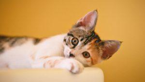 Thumbnail voor Meerdere katten met luchtbuks doodgeschoten: 'Dit moet stoppen!'