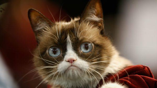 In 2019 overleed ook Grumpy Cat.
