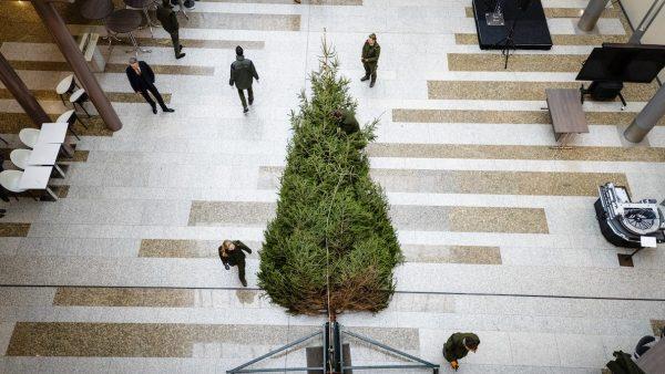 Kerstboom Tweede kamer acht meter hoog