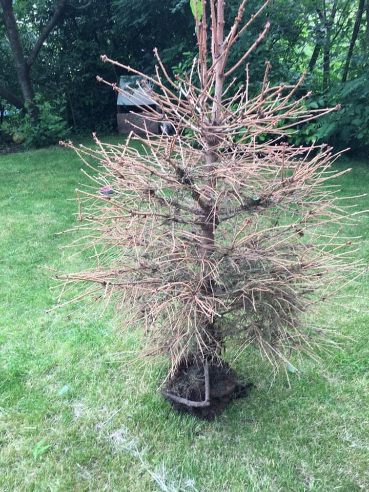 Uitgevallen boom