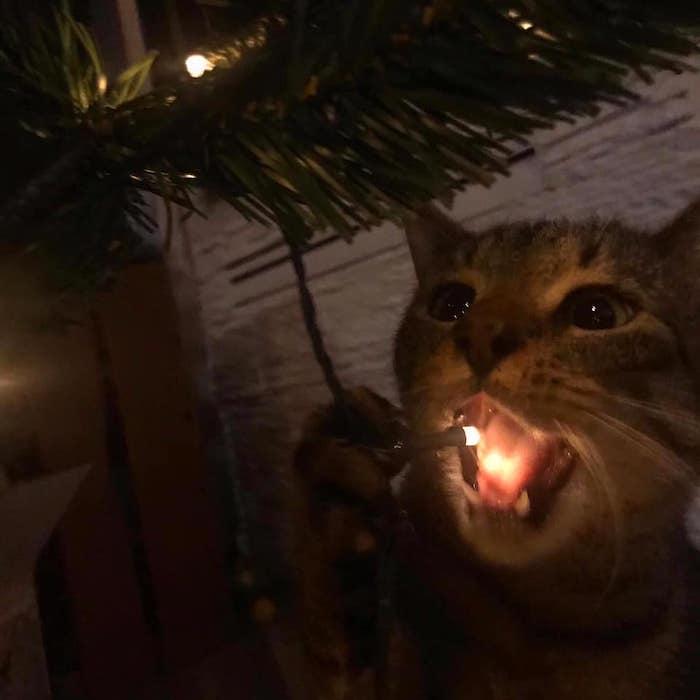 Kattige kerstversiering