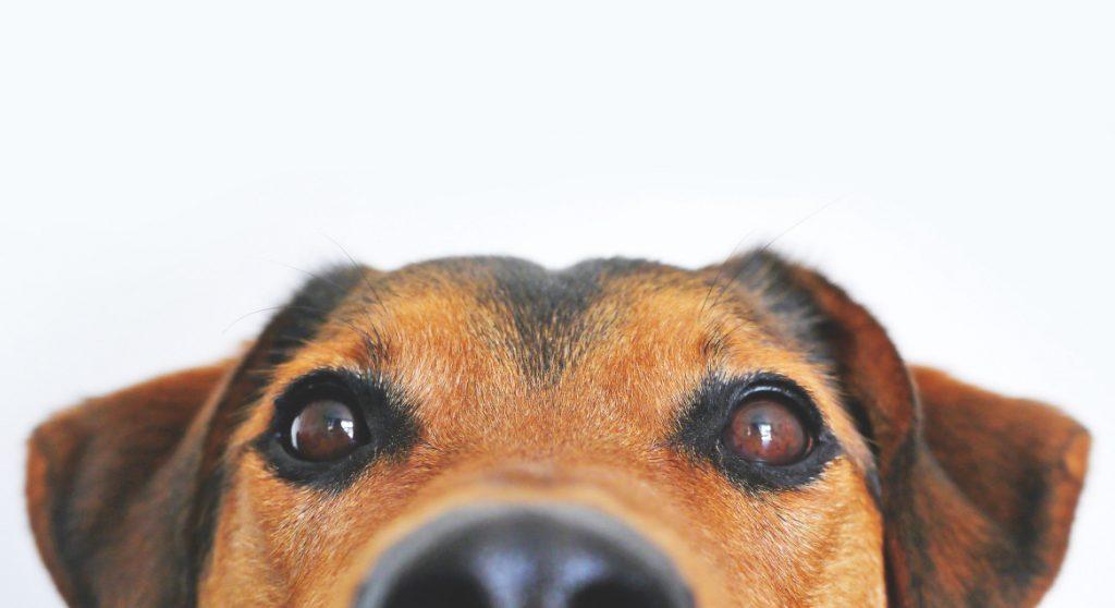 Dieren Spotify maakt playlist voor eenzame huisdieren