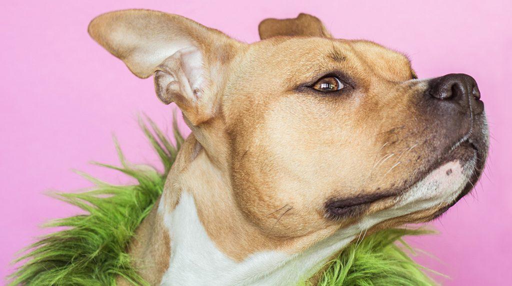 Dierenorganisaties starten een eigen hondenmarktplaats