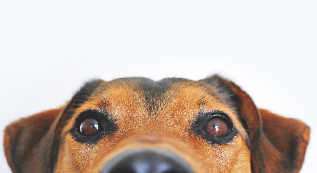 hond bierblikje verhaal vrouw gevonden