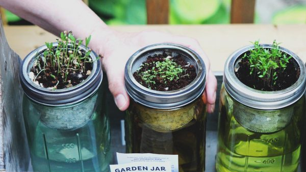 Tuinieren zonder tuincentrum: 7 tips waarvoor je de deur niet uit hoeft