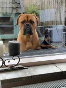 Hond buiten raam