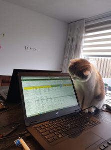 Kat bij laptop