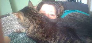 Kat ligt bij baas