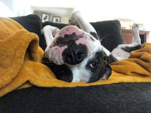hond ondersteboven op bank