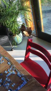 Kippen in woonkamer