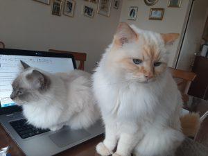 twee katten op laptop