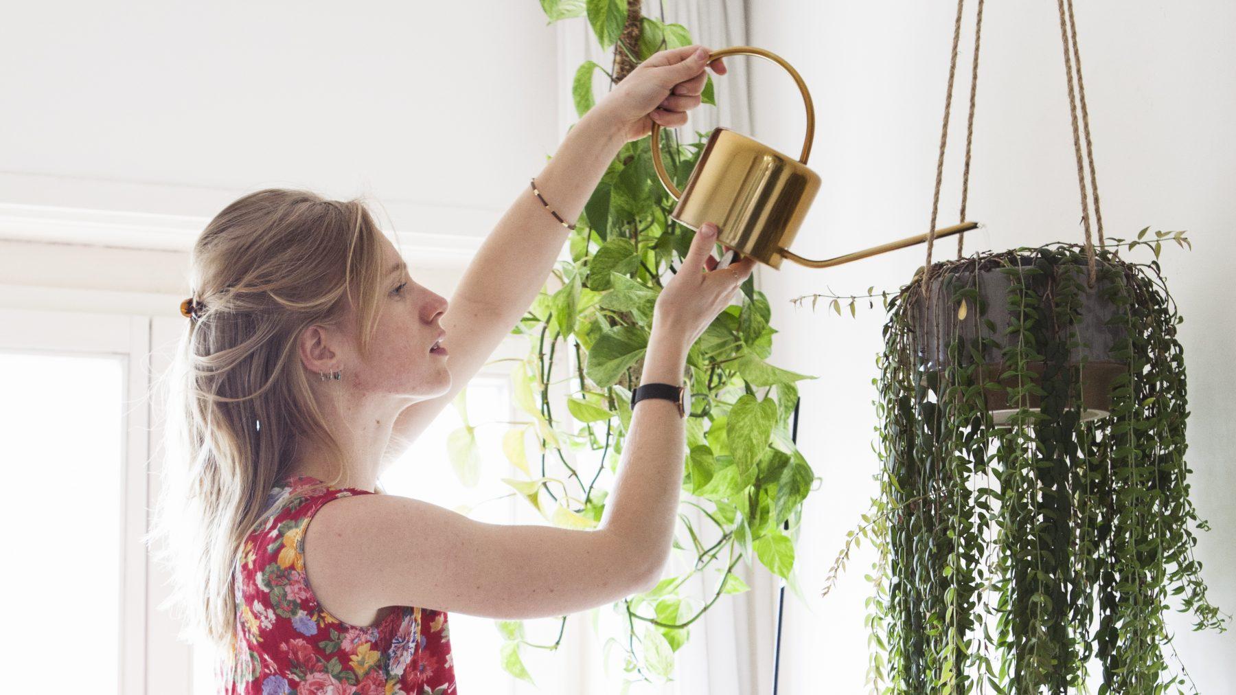 Mama Botanica - kamerplanten