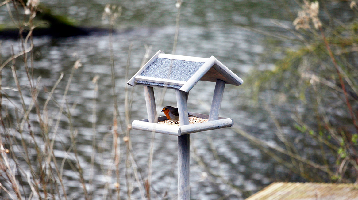 cursus tuinvogels in Nederland lijstje wat te doen dit Paasweekend