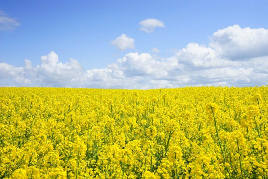 Hooikoortspatiënten opgelet: opnieuw zonnige dagen (en pollen) op komst