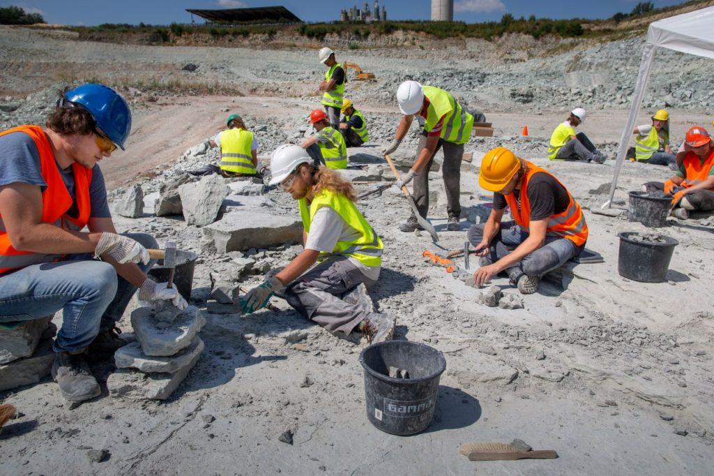 245 miljoen jaar oud (en tóch nieuw) Pissebed ontdekt in Winterswijk