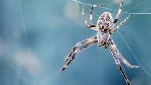 Un microcosmo del perché così tante persone temono i ragni (e come sbarazzarsi di quella paura)