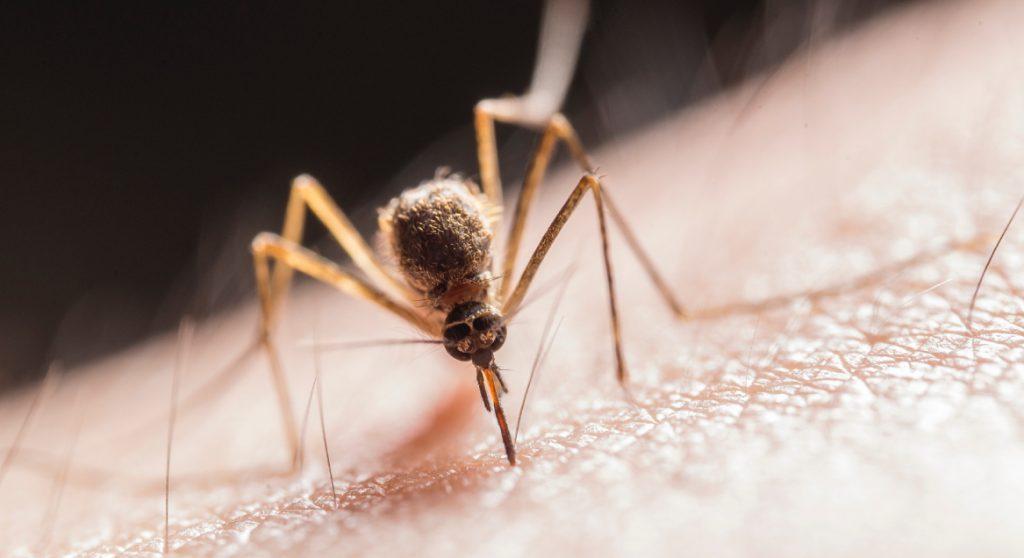 Bioloog legt uit waarom er zo veel muggen en fruitvliegen zijn en wat je ertegen kunt doen