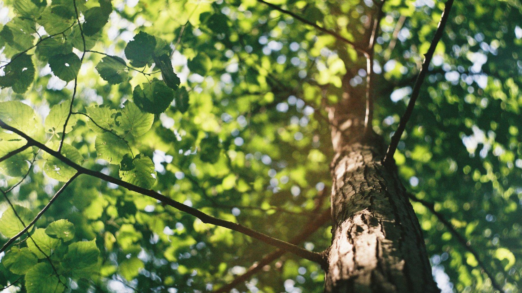 Nederland heeft er 1,6 miljoen bomen bij en dat is slechts het begin