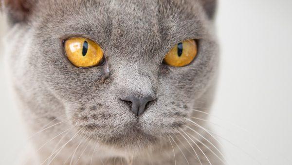 internationale kattendag kat opgezet josie vrouw