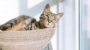 Dodelijke kattenziekte opgedoken in Ermelo en Harderwijk