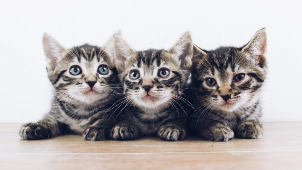 kittens Lieke Elberse