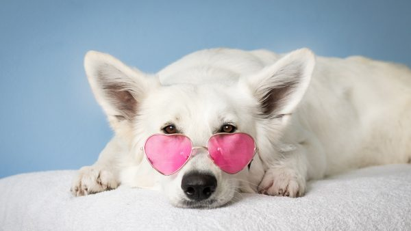 viervoeter huisdier koel houden zomer hittegolf dier hond kat konijn