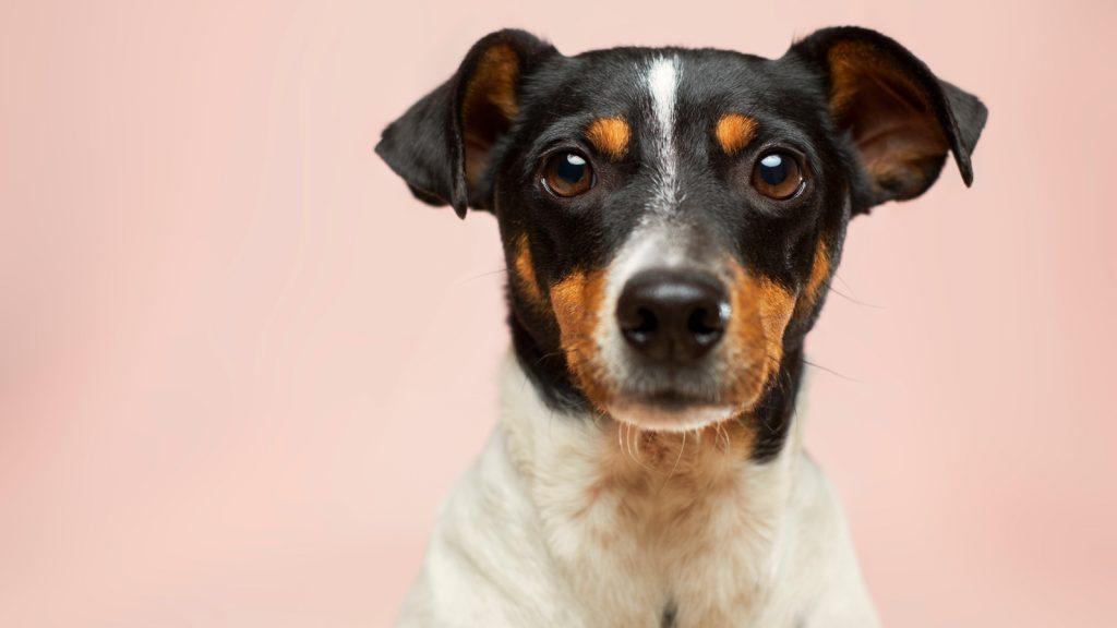 Koek happen_ dit Instagram-account vult jouw tijdlijn met snackende honden-2