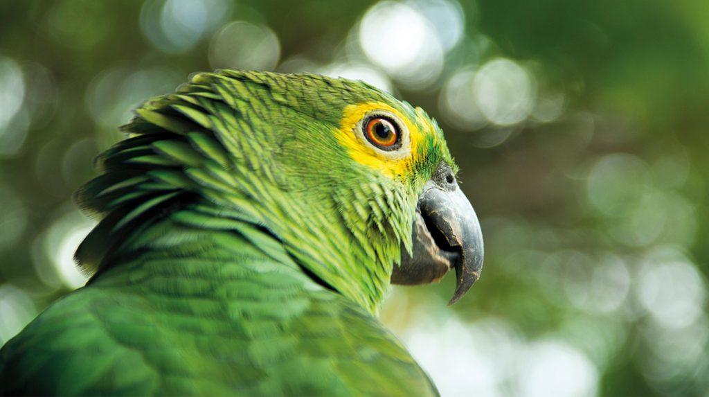 Papegaai Chico zingt de sterren van de hemel