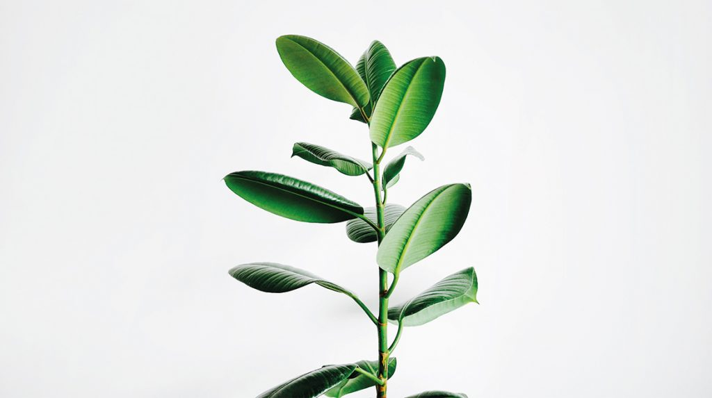 Potdomme- deze kunstenaar koopt kamerplant voor 4600(!) euro