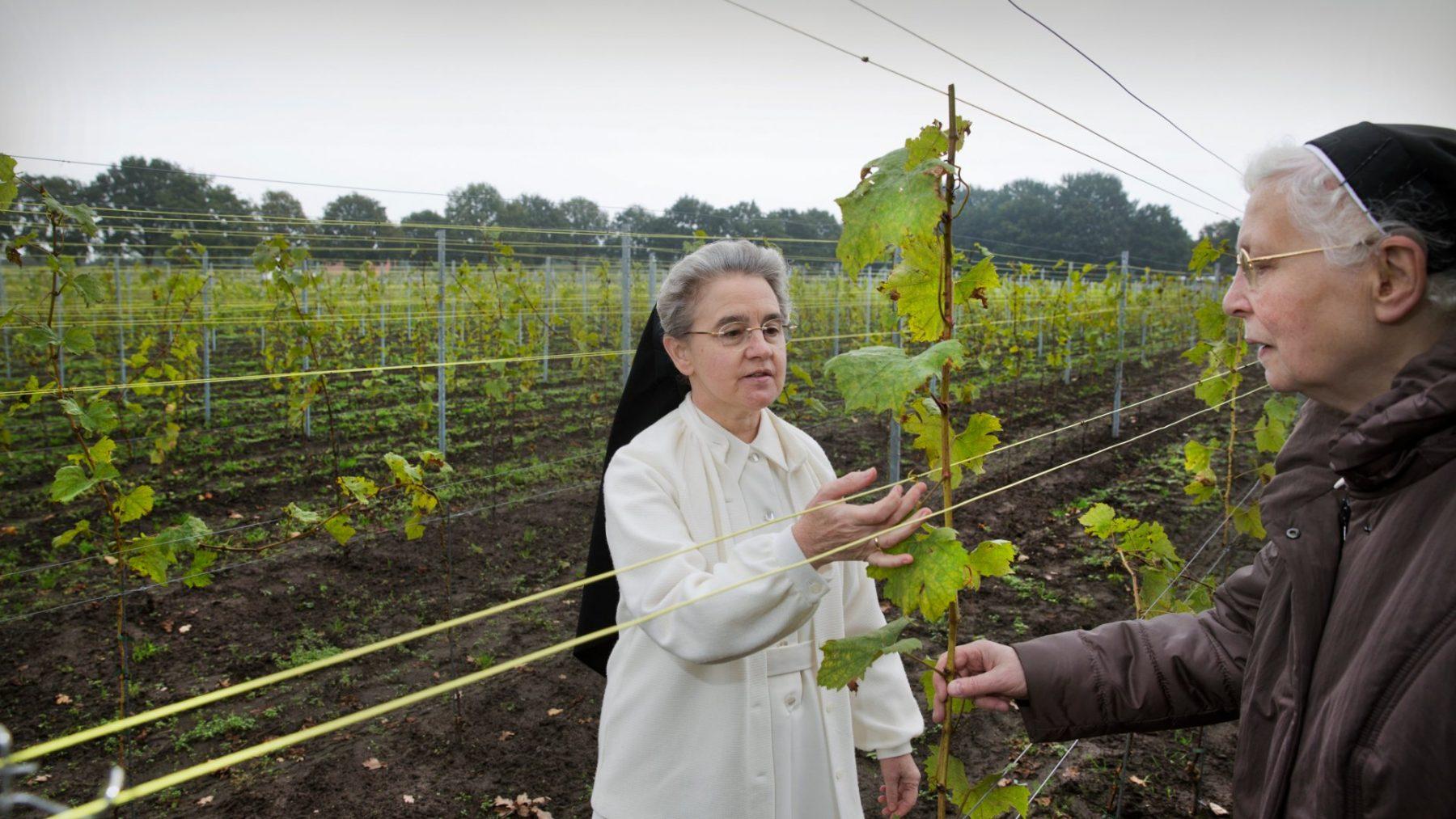 Wijnen, wijnen: deze nonnen hebben 20.000 flessen over