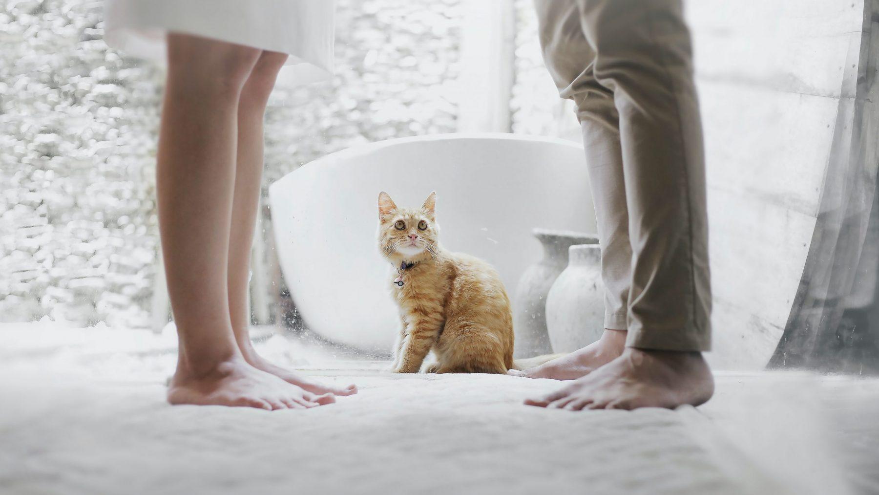 poes kat scheiden scheiding